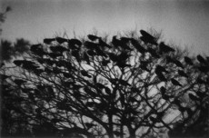 ukase, Masahisa, Kanazawa, from the series The Solitude of Ravens, 1977