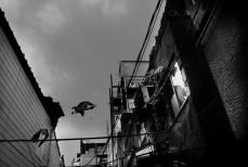 Masahito Agake Gallery -- Image 10
